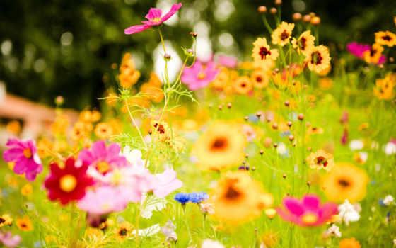 цветы, colorful, uploaded