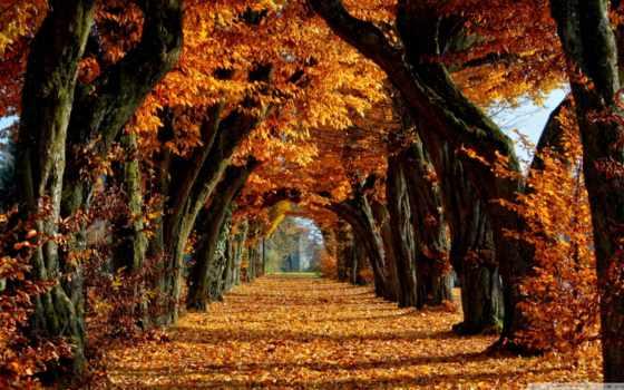 природа, осенняя, осень, favourite, года, time, аллея, алея,