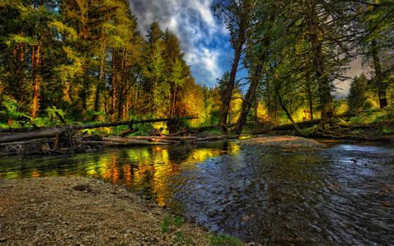 природа, landscape, лес, река, nice, осень, cool,
