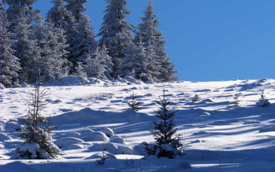 felbontású, legnagyobb, feltöltve, háttérkép, erdély, choinki, feb, zima, nieg, февр,