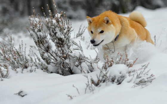 hunting, зимняя, сиба