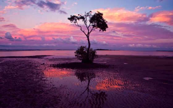 дерево, одинокое, природа, trees, разных, разрешениях, mix, beaches, мертвое,