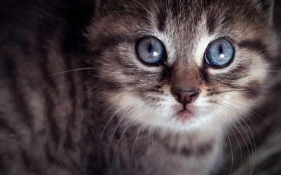 котенок,