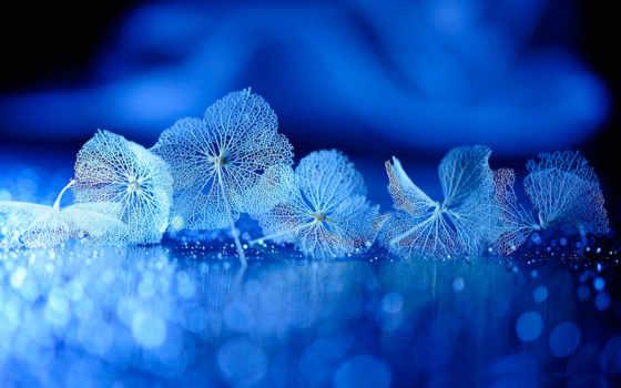 ,, синий, вода, природа, небо, макросъемка, цветок, зимний, гортензия, макросъемка