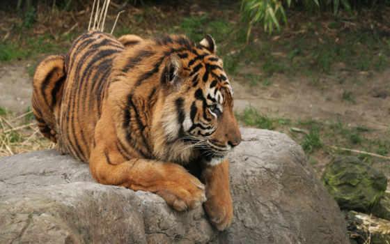 harimau, абстрак, lukisan, art, gambar, абстракция, тигр, hewan, abstract,