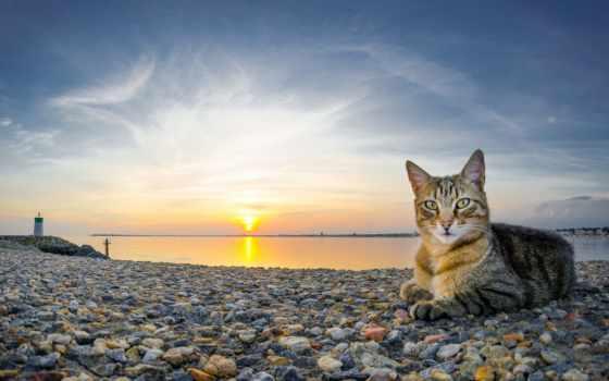 кошки, кот, sun, пляж, море, камни,
