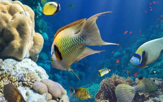 pisces, морская, тематика, оптом, экзотические, коралловые, underwater, рифы, акула, world, pinterest,