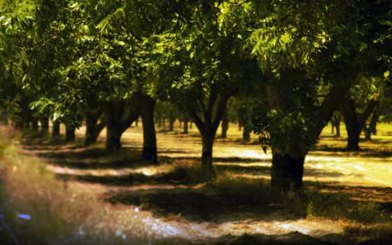 park, trees, курс, всех, golf, которых, природа,