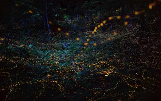 япония, fireflies, photos