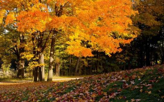 autumn, осень, деревья, покров, листва, wallpaper, colors, впереди, природа, and, time, desktop, fall, wallpapers, картинка, картинку,