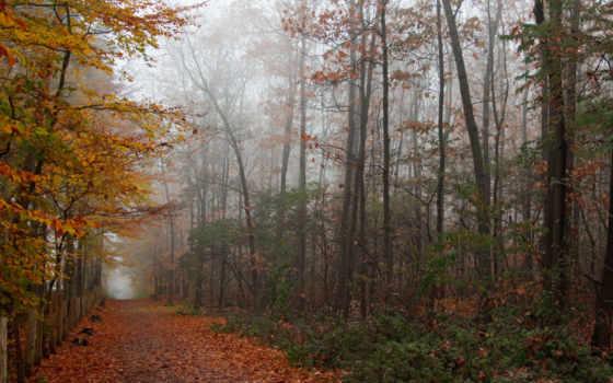 лес, осень, графика