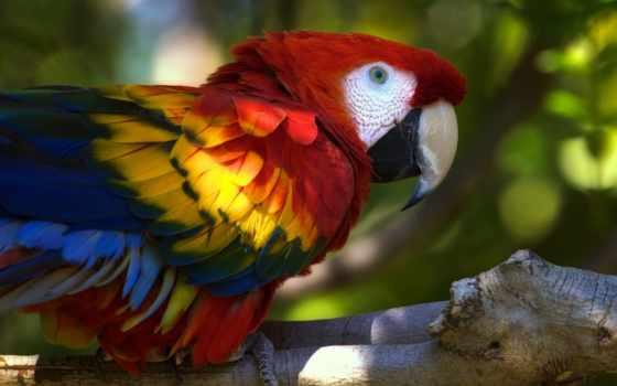 попугай, взгляд, wavy, colorful,