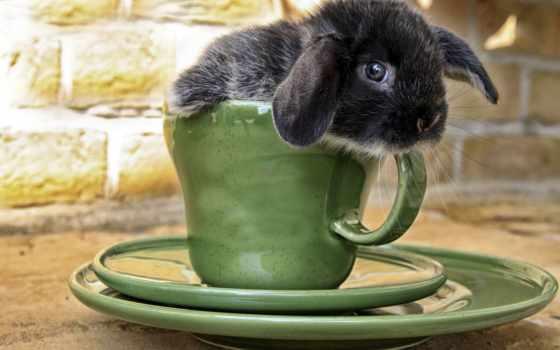 кролики, коллекция, avto