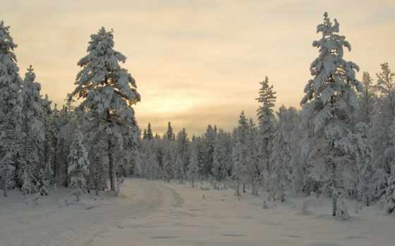winter, trees, снег