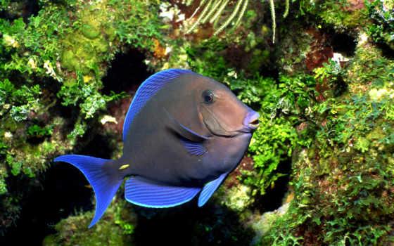 poisson, poissons, sous, tropical, bleu, fish, ecran, eau, ocean,