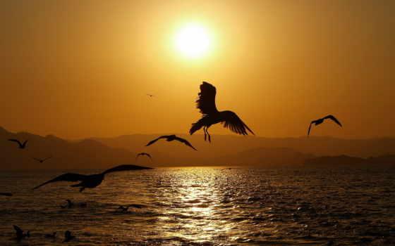 птицы, со, закате, водой, море, закат,