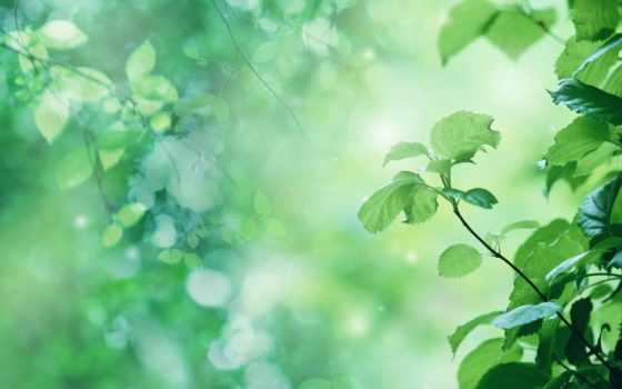береза, макро, листва, branch, ствол, дерево, весна, escape, зелёный,