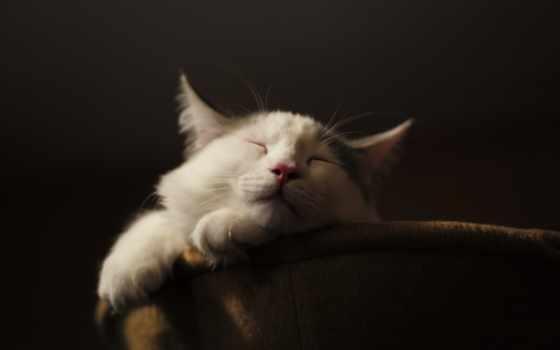 спит, отдых,