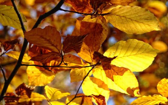 природа, осень Фон № 26166 разрешение 1920x1200