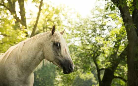 грива, лошадь, морда