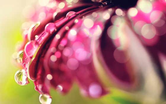 makro, цветок, боке
