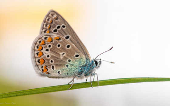 бабочка, зелёный, desktop