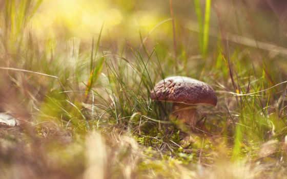 mushroom, травинки, дек