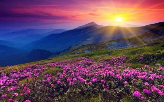 рассвет, горы, цветы