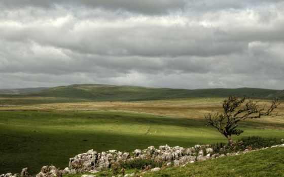 природа, поля, поле, зелёный, landscape, high, wide,