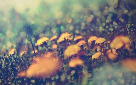 iphone, трава, cvety, одуванчики, desktop, фон, hintergrundbild,