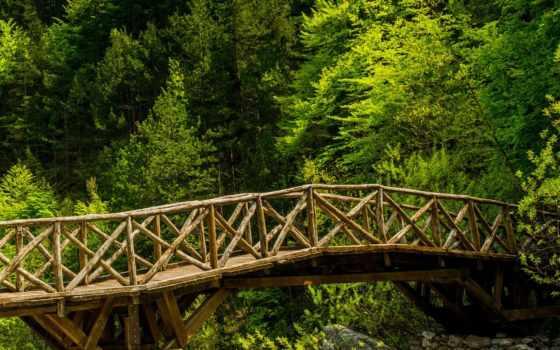 wooden, мост, лес, густой, зелёный,