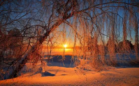закат, природа, лес, rising, коллекция, trees, дерево, winter, вечер, красивые,