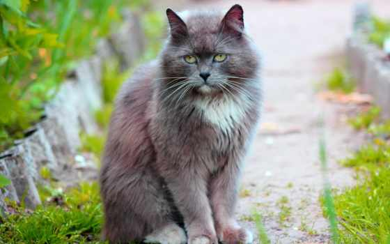 кошки, zhivotnye, скачано, категория, метки, кот, добавил, программа, автоматически, определит,