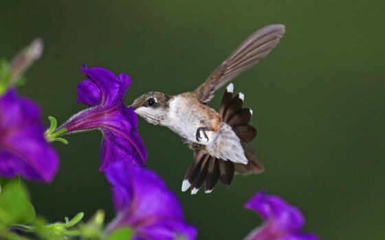 nature, birds, heart, 동물, flowers, purple, animals, hummingbirds,