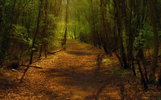 мне, лес, можно