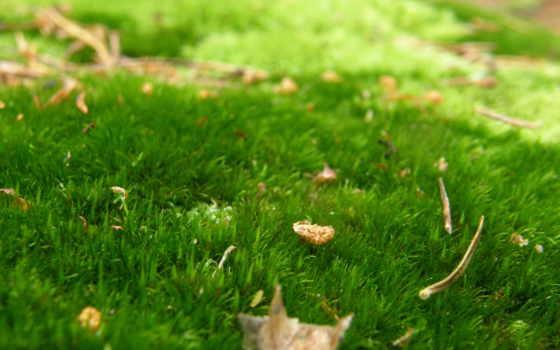 ковёр, зелёный, трава