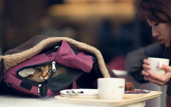кот, cats, animals, desktop, free, best, animal, widescreen,