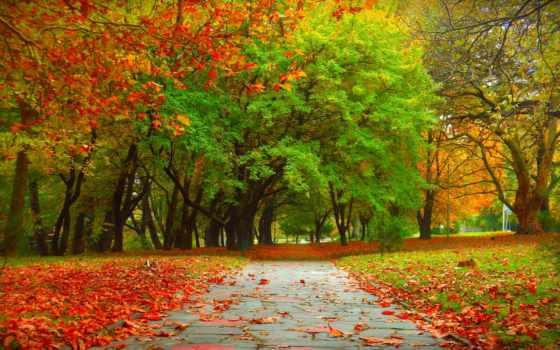осень, trees, дерево, пасть, wallpapersafari, природа, park,