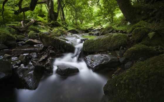 ecran, природа, fonds, forêt, fond, rivières, ruisseaux,