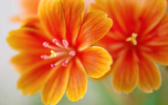 утро, хороший, wishes, birthday, эксперт, улыбка, pinterest, изображение, images, ан,