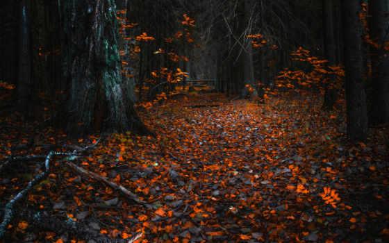 , природа, лес, листья, осень,
