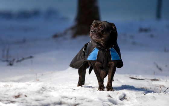 winter, собаки, страница