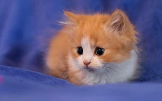 you, sweetheart, открытки, котенок, очень, взгляд, бесплатные, открыток, postcard, miracle, перейти,