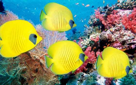 рыбки, pisces, world, underwater, море,
