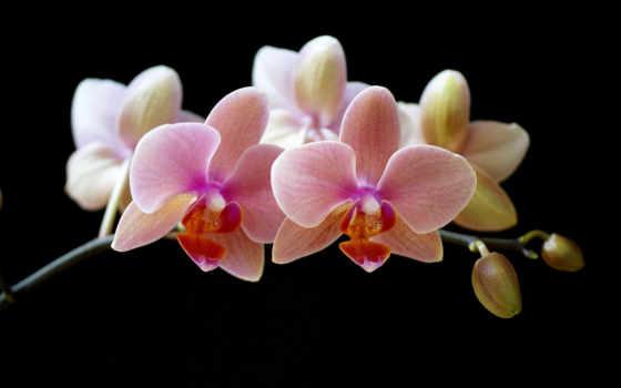 орхидеи, цветы Фон № 14812 разрешение 1920x1200