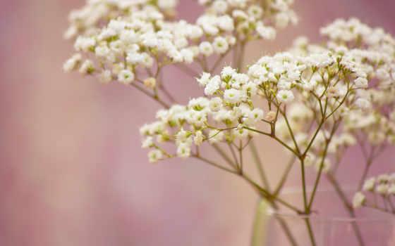 цветы, ветка