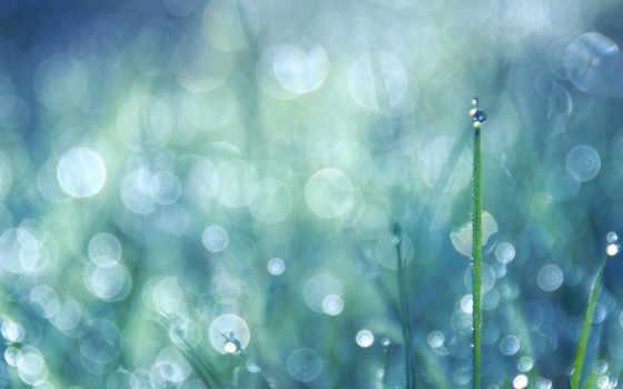 макро, капли дождя