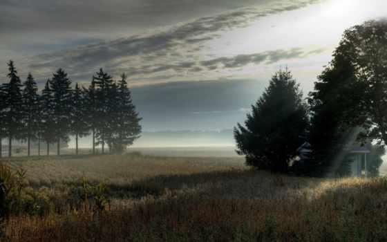 утро, поле