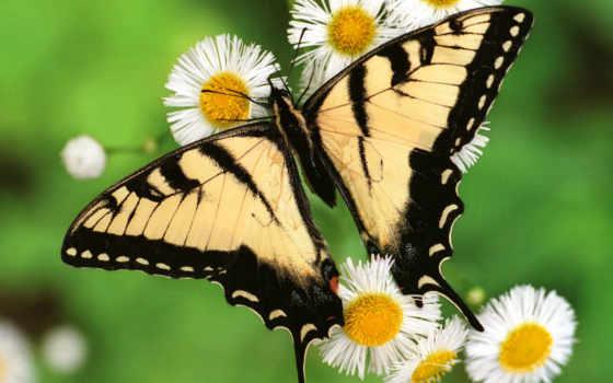 бабочки, стиль