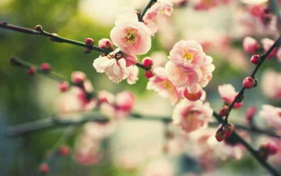 цветы, природа, растение